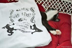 catsatthebartshirt