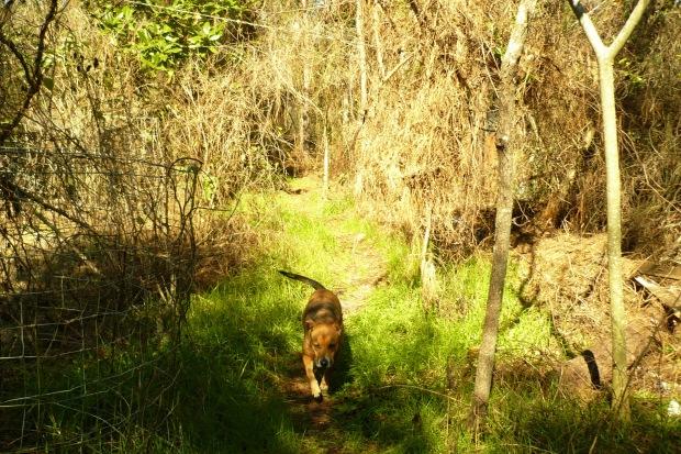 dingowoods2
