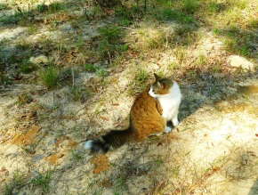 catworry