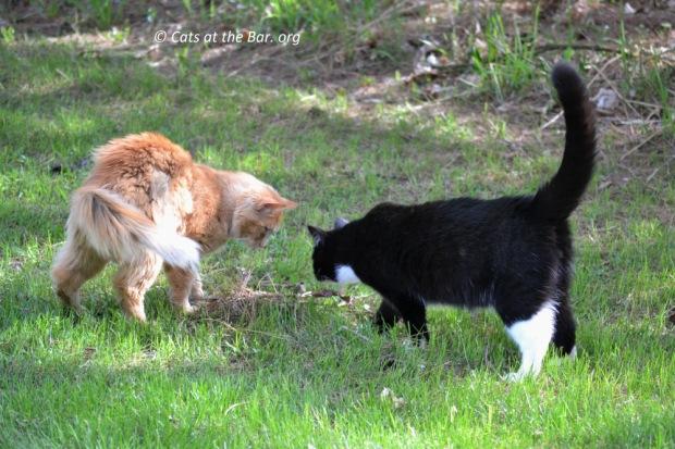 Cats at The BAr. org