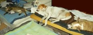 dogcatsleep