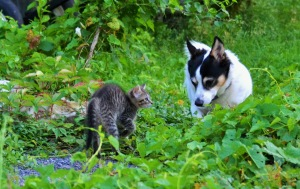 catdogconvers