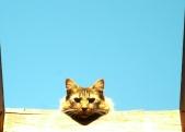 catskylight