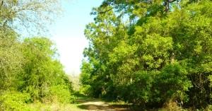 lostforest