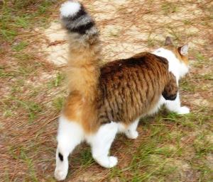 footlongcattail
