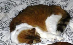 bedcat3