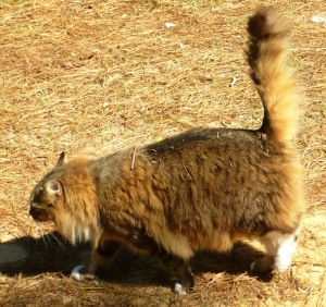 cat meteor