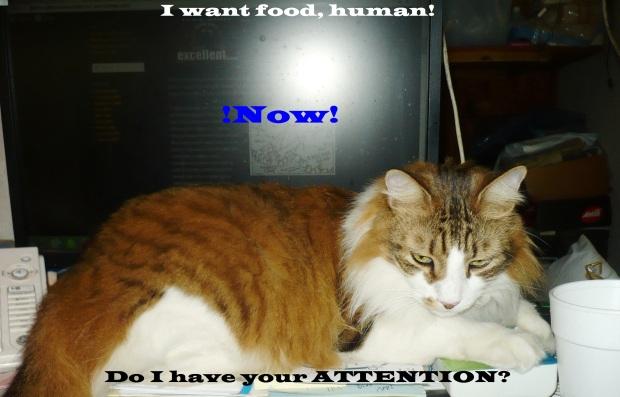 foodnow