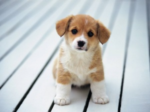 puppystuff