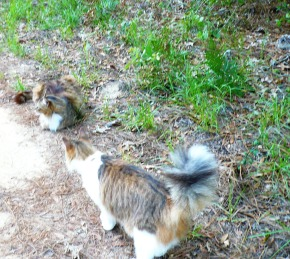 cat-converse
