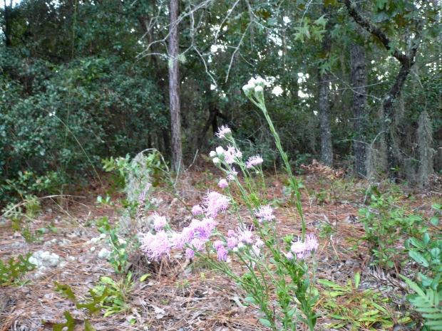 fall-flowers