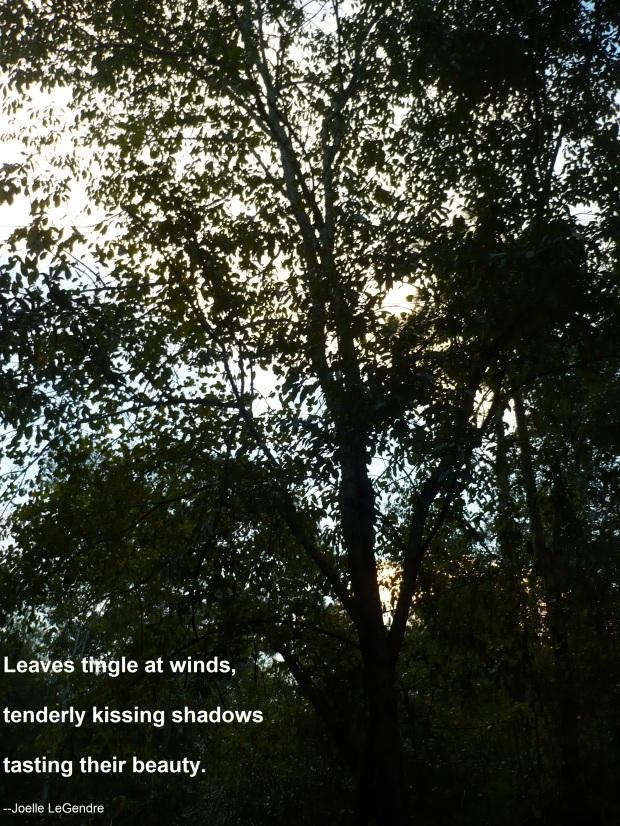 leaves-tingle