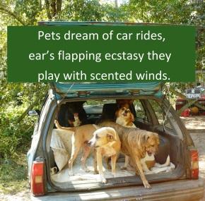 the-dogmobile