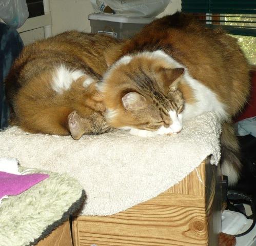 cuddlecats
