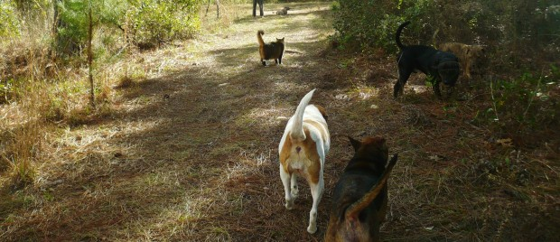 cat-n-dogs-walk