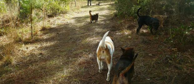 cat-n-dogs-walk